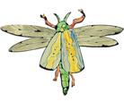 Moritz Götze. Kleines Insekt